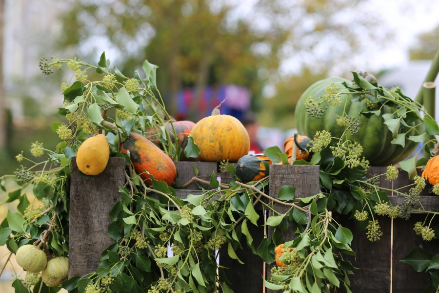 Hortomnales courges