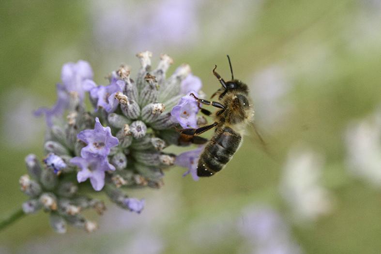 biodiversité néonicotinoïdes