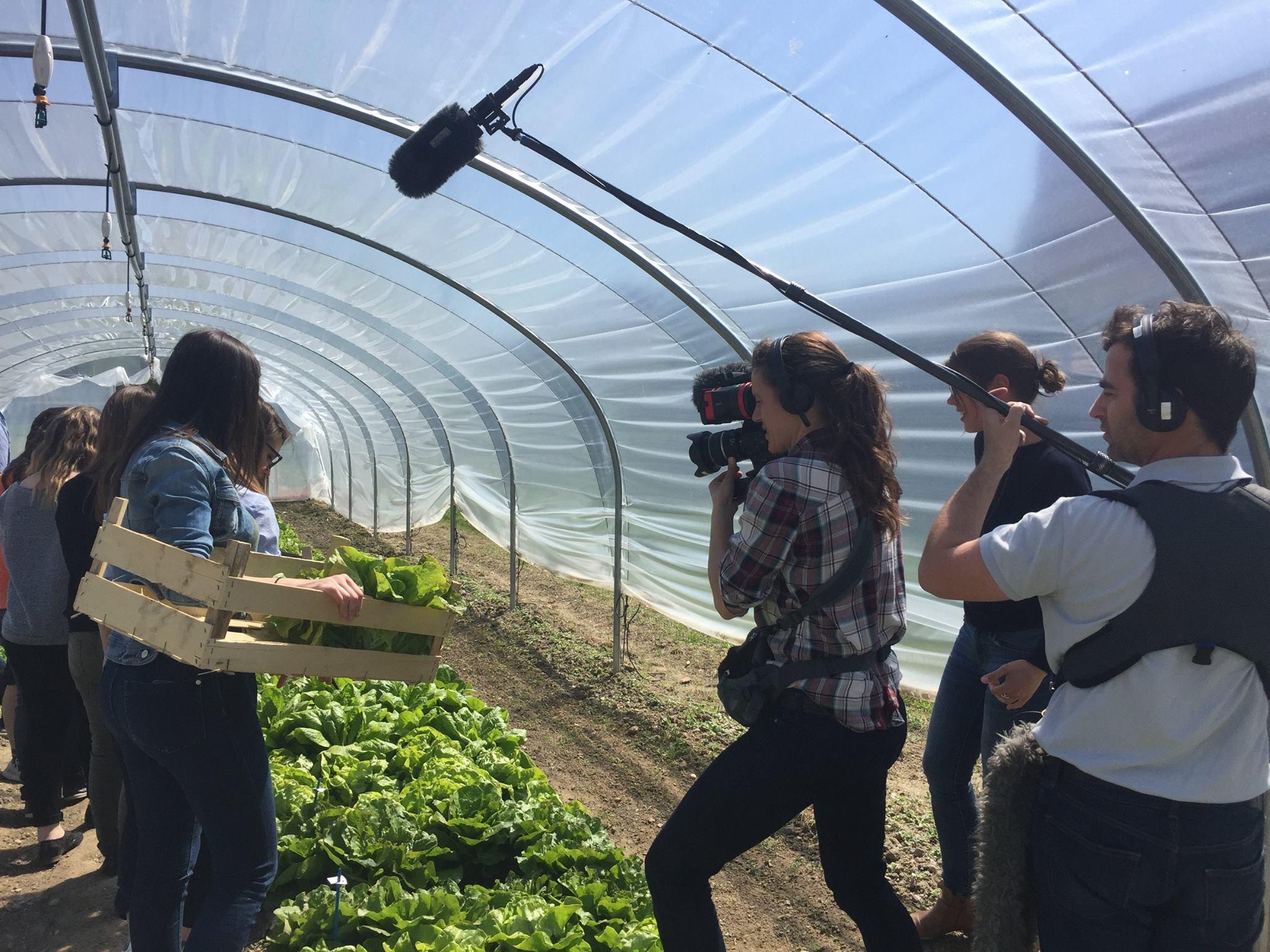 Des tournages et des salades ! Ferme de Sainte Marthe