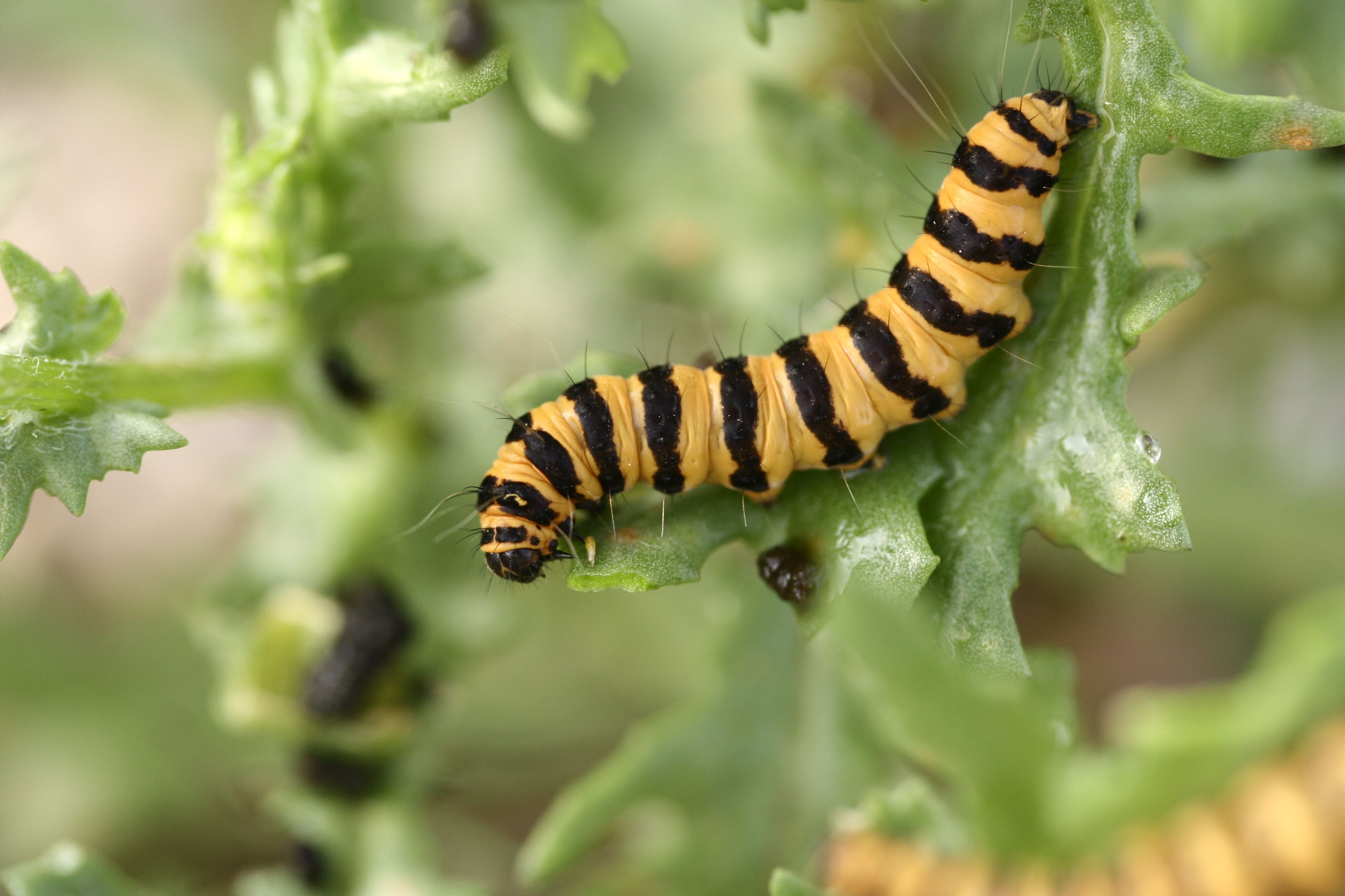 Lutte bio : contre les ravageurs et sans pesticide !