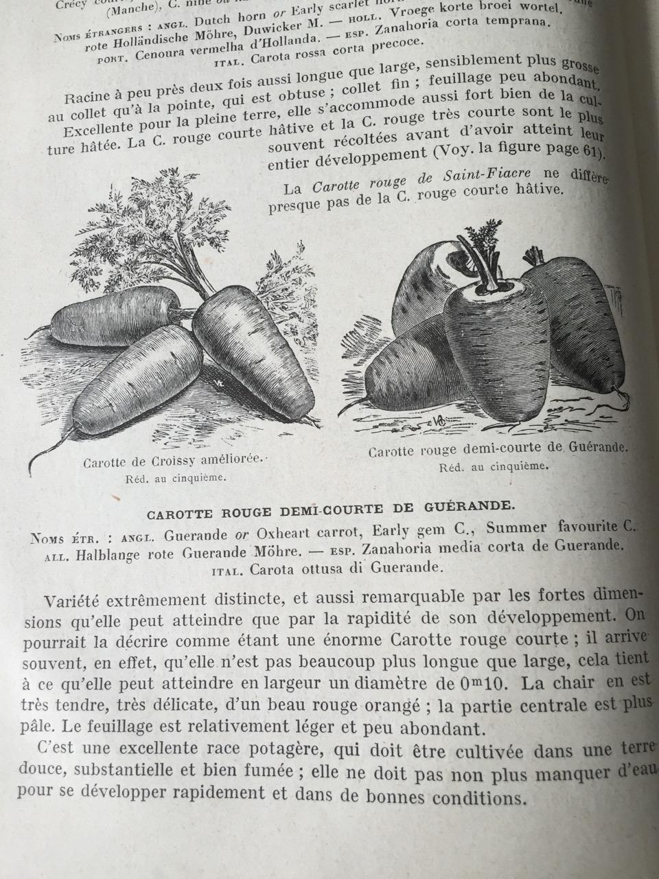 Comme un lundi... Catalogue Vilmorin Ferme de Sainte Marthe