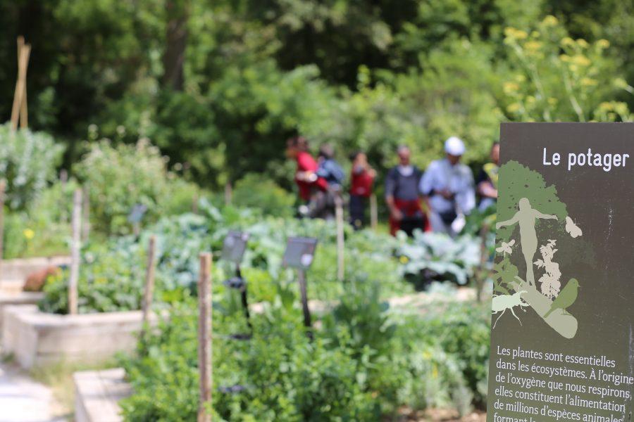 Découvrez le potager du Parc Zoologique de Paris