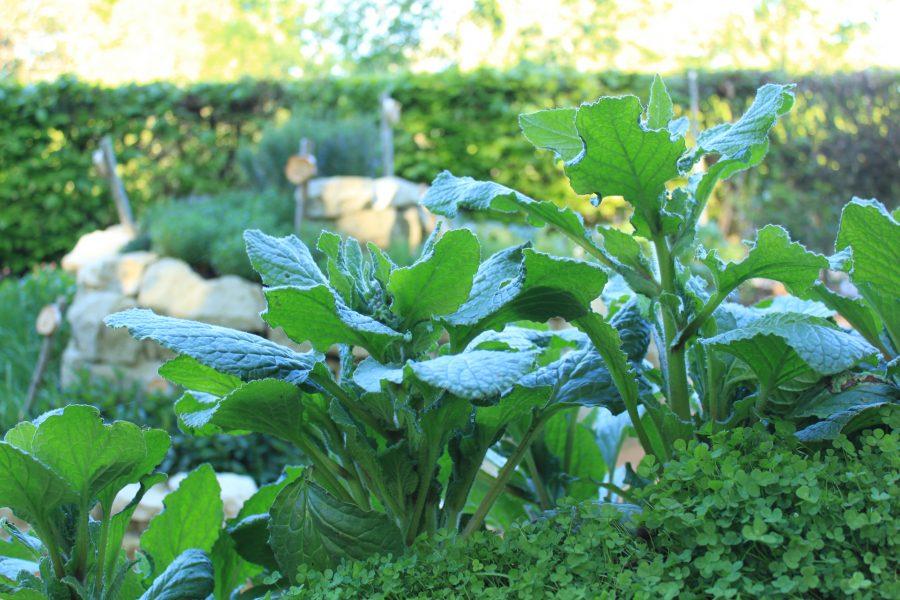 le jardin qui se savoure #ferme_marthe