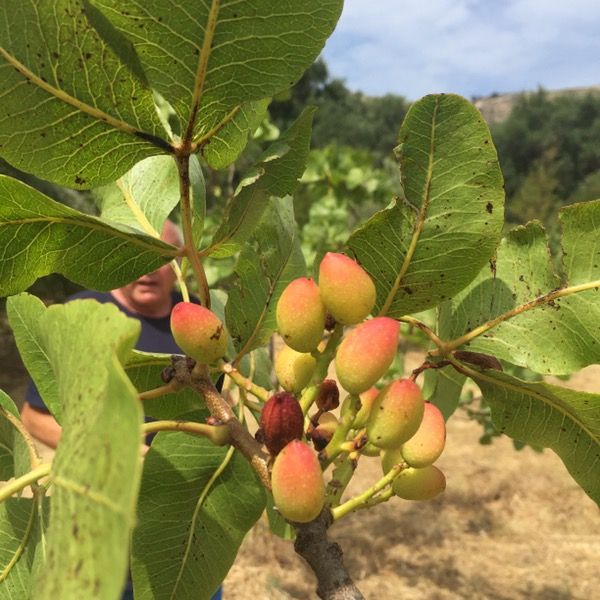 Le Jardin botanique fruitier de Robert Kran - Avapessa