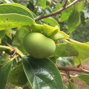 Le Jardin botanique fruitier de Robert Kran