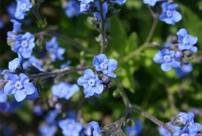 Des teintes et des saveurs sauvages dans votre jardin !