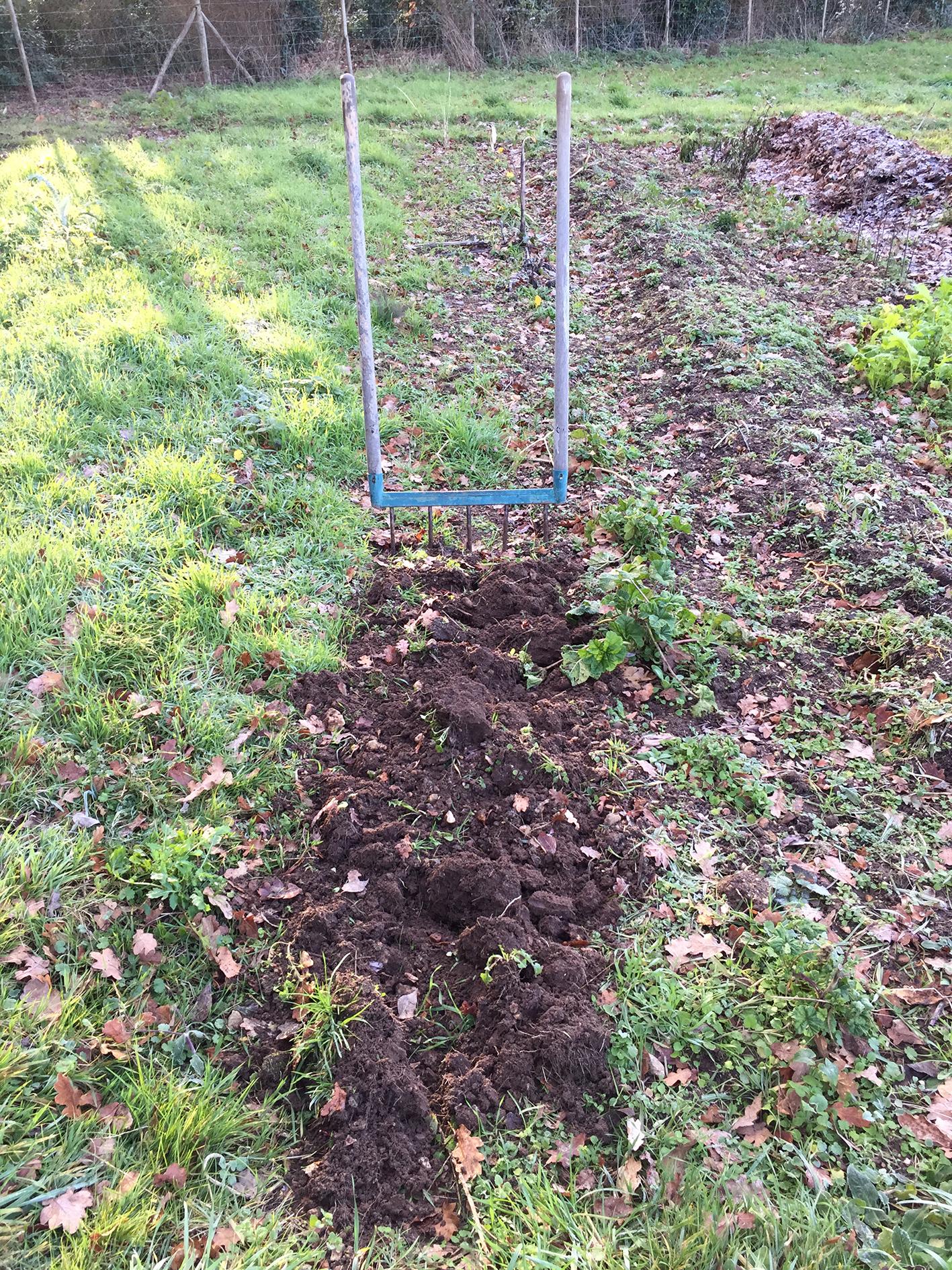 Plantation de l'ail de printemps - Chronique au jardin de ...