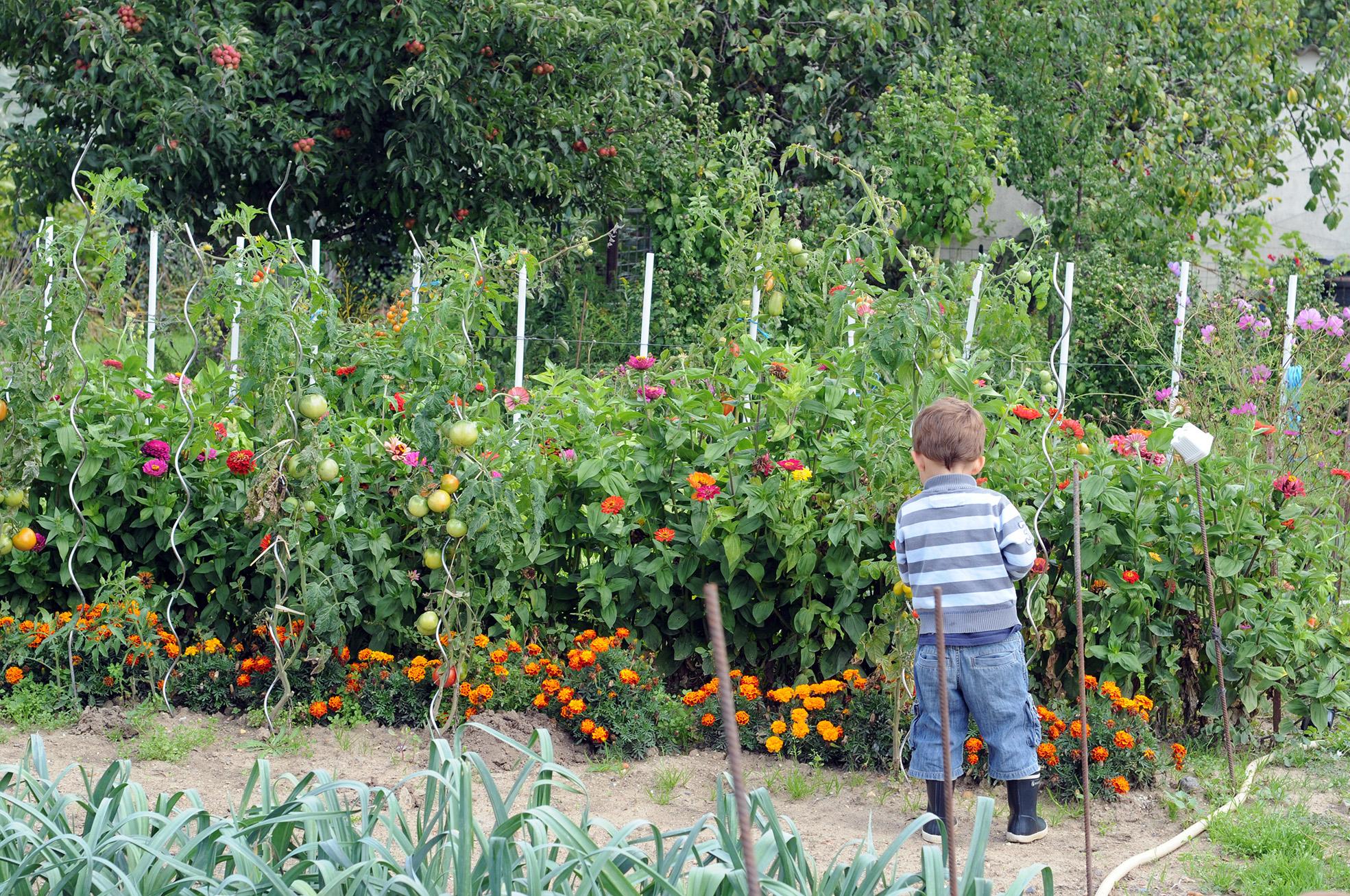 Un potager nourricier nous vous guidons pour concevoir for Concevoir son jardin