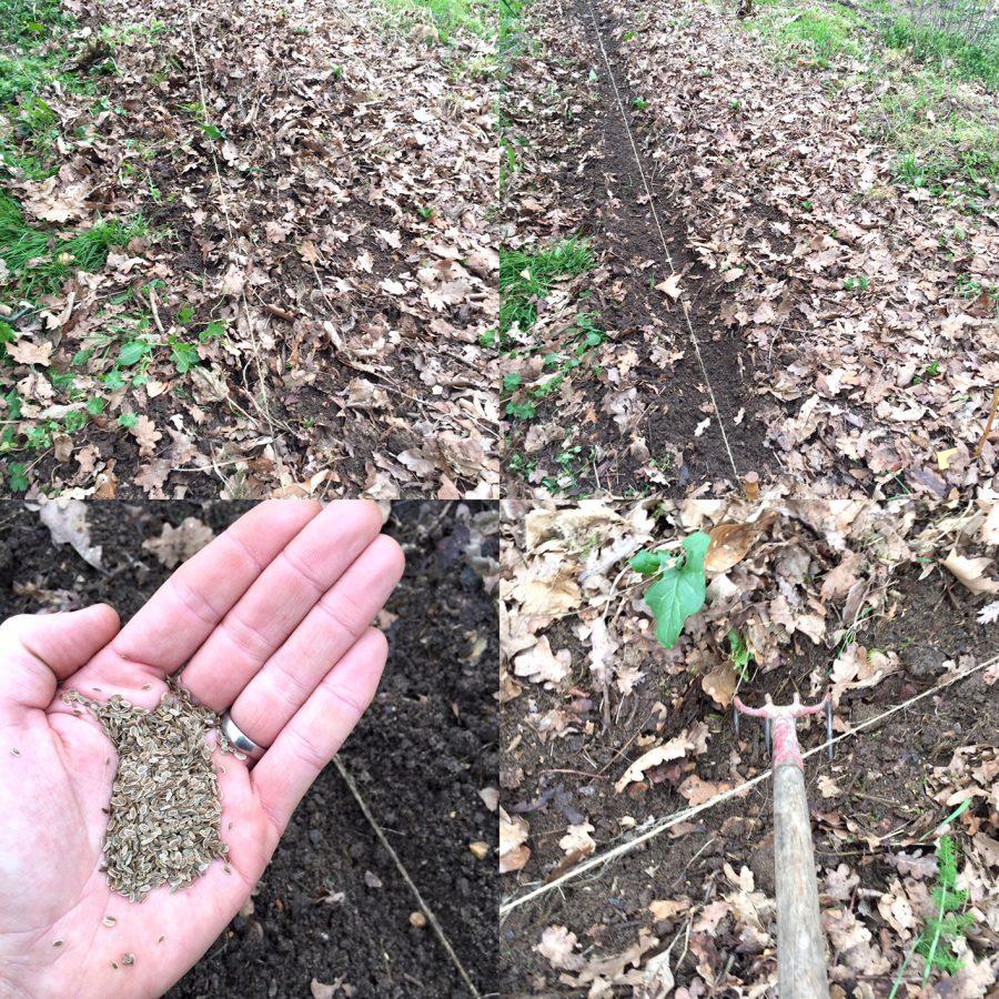 Semer les racines