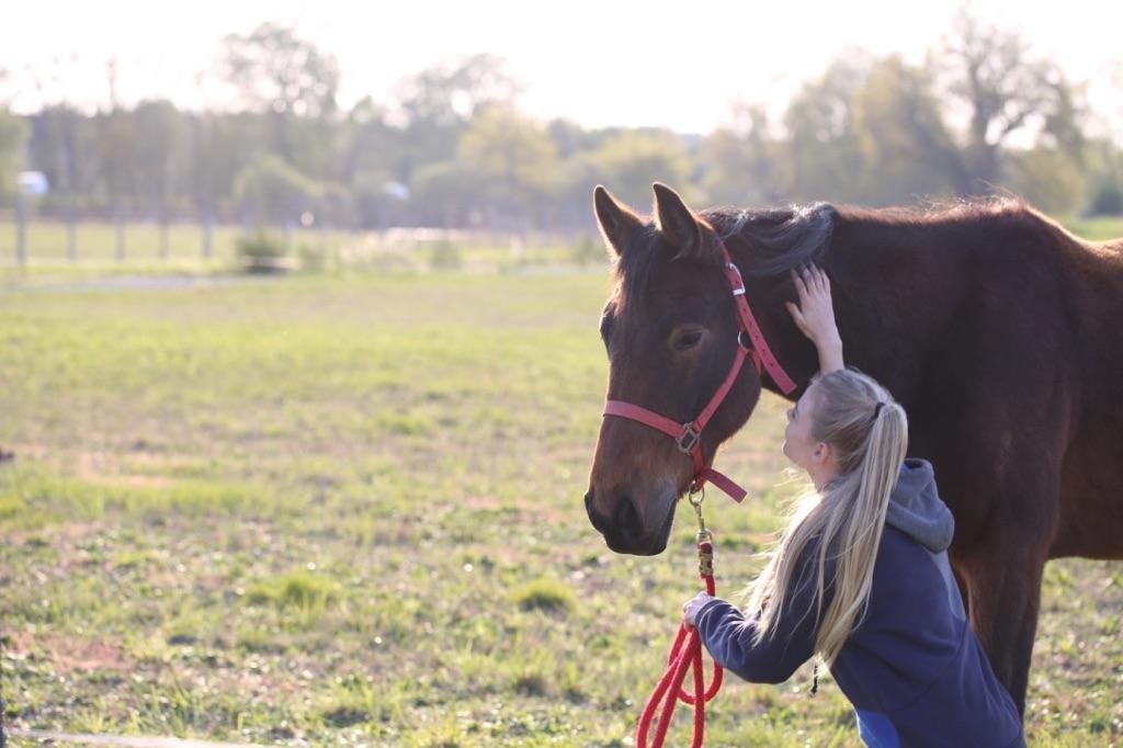 chevaux à la Ferme de Sainte Marthe