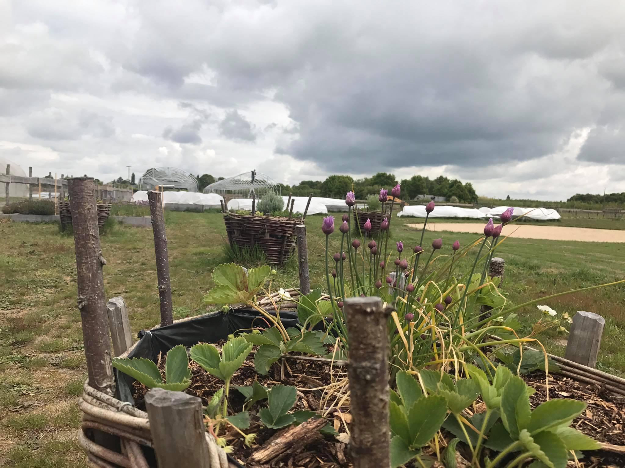 Sur notre terrain de production la ferme de sainte marthe for Camping au jardin de la ferme