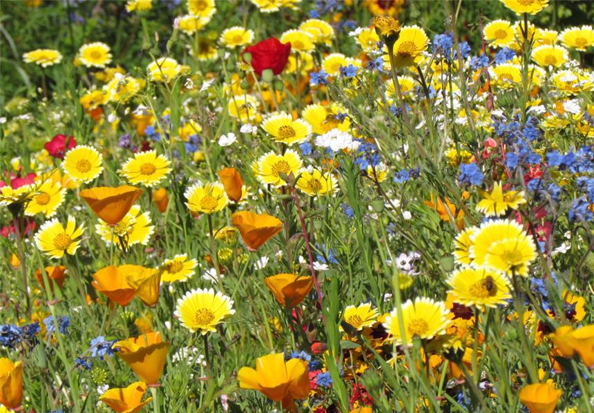 prairie fleurie