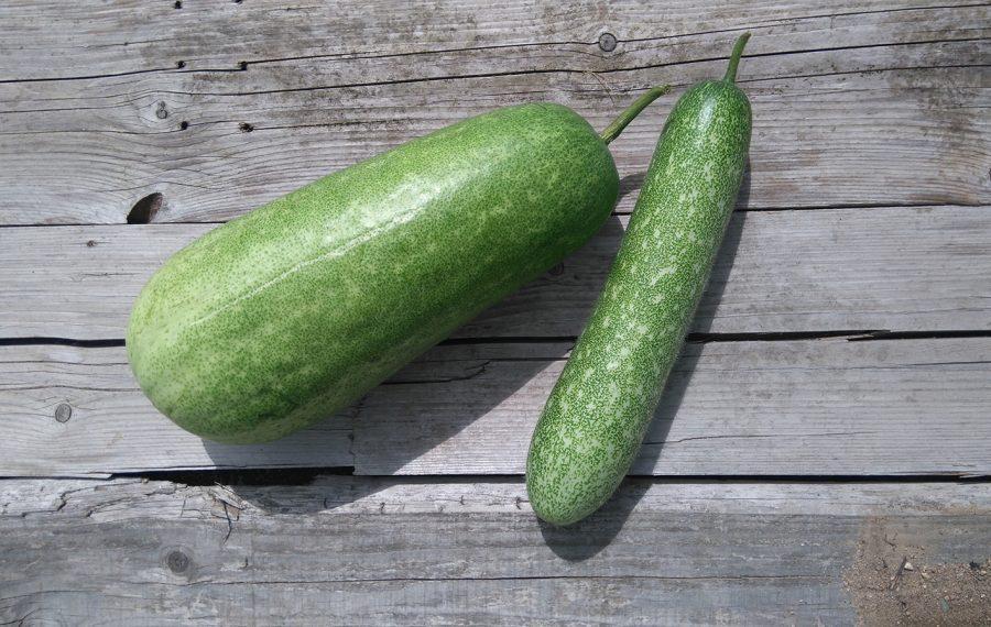 Melon d'hiver