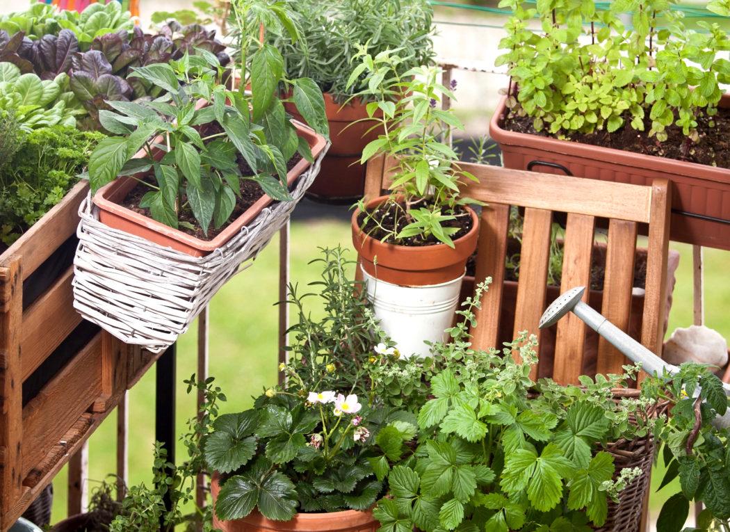 Quels Legumes Faire Pousser Sur Son Balcon La Ferme De