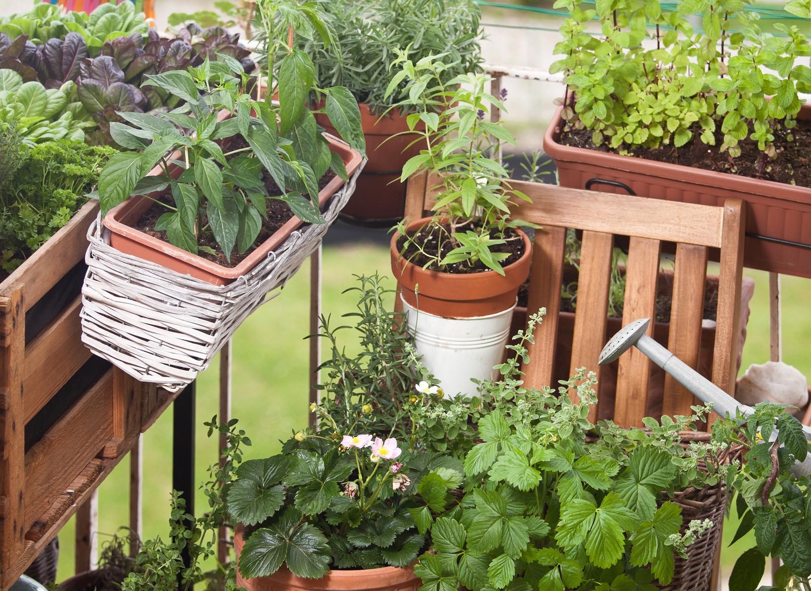 balkongarten urban gardening - le blog