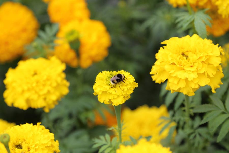 Attirer les pollinisateurs au jardin - Blog La Ferme de ...